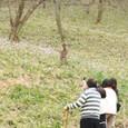 カタクリの群生を写す人たち