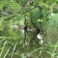 クヌギと水路の田舟