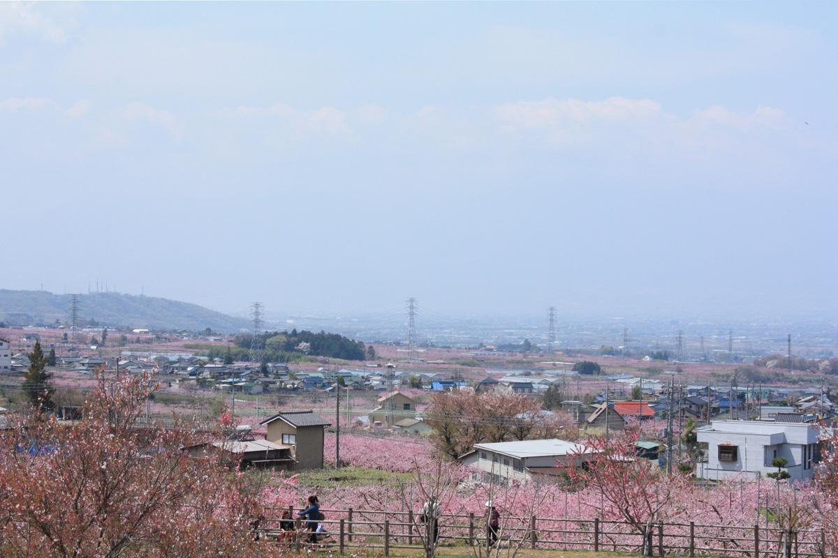 山梨県笛吹市の桃源郷を訪ねて 4月19日: 暖かさと希望を届けたい