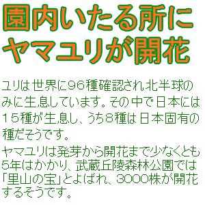 Cocolog_oekaki_2013_07_28_15_43