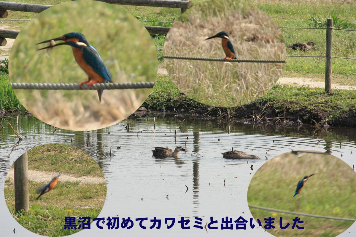 Img_30042_2