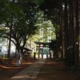 篠岡八幡大神社の杜